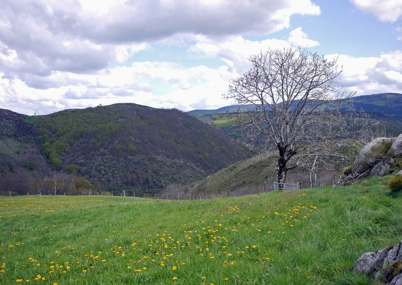 Descente vers le Pont-de-Montvert
