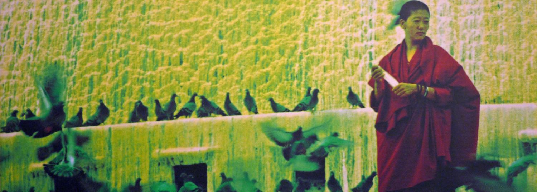 Le vol du paon mène à Lhassa (Élodie Bernard) - Illustration de couverture