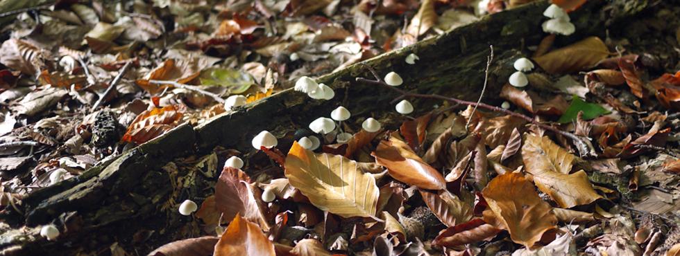 On marche dans l'automne