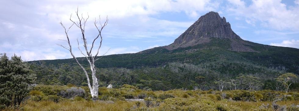 Un arbre sur l'Overland Track, en Tasmanie